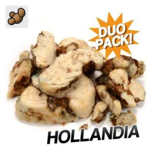 Buy magic truffles Hollandia