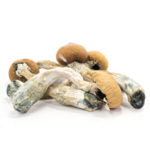 Albino Penis Envy Mushrooms|Buy magic mushrooms online